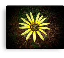 sunshine on a dull day Canvas Print