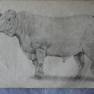 """Early Work - """"Charolais Bull"""" by louisegreen"""