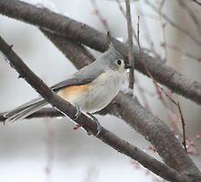 Grey Bird on Snowy Day by RandPx2