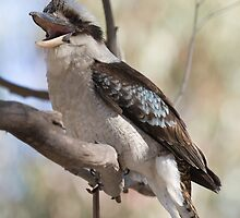 Australian Native Birds - 2010 by David de Groot