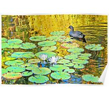 Waterfowl [after Claude Monet] Poster