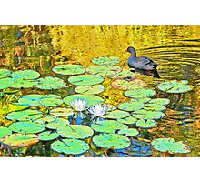 Waterfowl [after Claude Monet] Photographic Print
