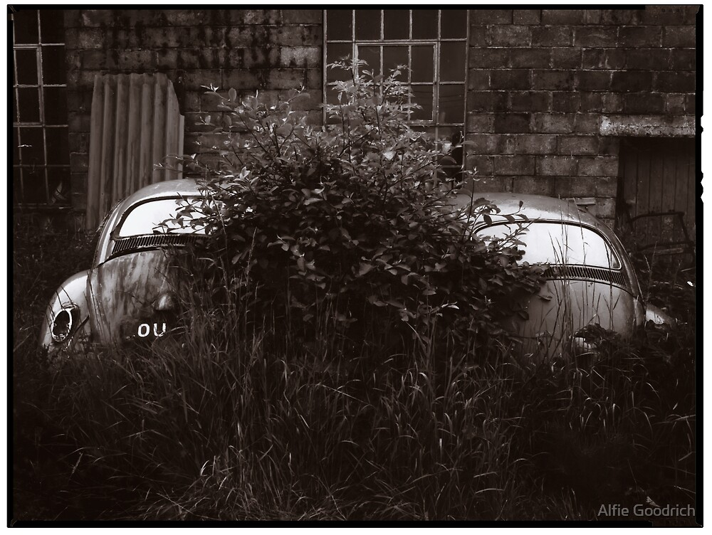 Where Old VW Beetles Go To Die by Alfie Goodrich