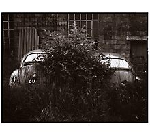 Where Old VW Beetles Go To Die Photographic Print