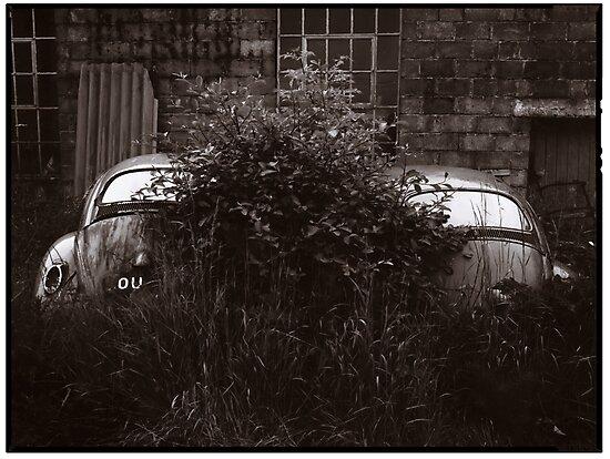 Where Old VW Beetles Go To Die by Alfie Goodrich