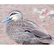 """Momma Duck"" Photographic Print"