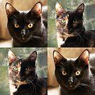 Black cat and Tortoiseshell cat  by ljm000