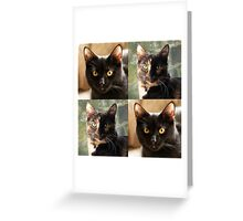 Black cat and Tortoiseshell cat  Greeting Card