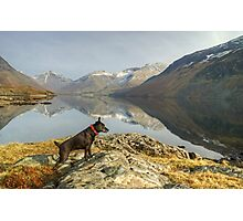 The Poise Of The Posing Patterdale Photographic Print