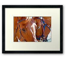 Equine Bonds Framed Print