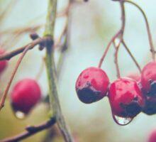 Wet red berries Sticker