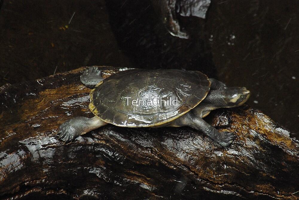 Yoga Turtle - Cobra Pose  by TerraChild