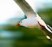 Flying Speed by Kelvin  Wong