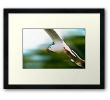 Flying Speed Framed Print