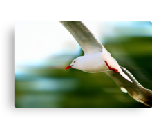 Flying Speed Canvas Print