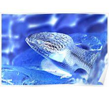 Blue Little Blue Tongue Poster