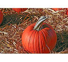 Pumpkin Patch II Photographic Print