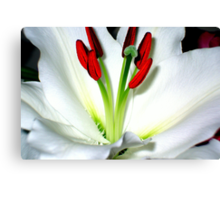 The Heart Of A Lily Canvas Print
