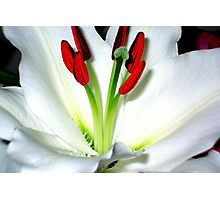 The Heart Of A Lily Photographic Print