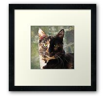 Tortoiseshell cat looking at camera Framed Print