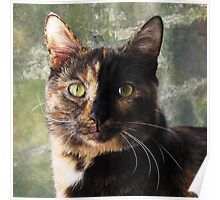 Tortoiseshell cat looking at camera Poster