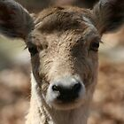 ~The Deer & Her Perty Close-Up~ by Cindy Lemoi