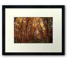 Autumn Woods... Framed Print