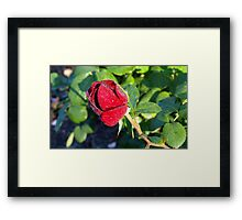 A definate for the Ladies Framed Print