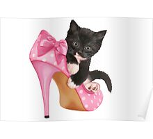 Cute Kitten with Shoe Poster