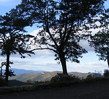 Three Trees by Butterfly2008