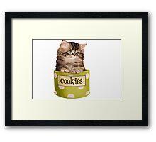 Funny Kitten Framed Print