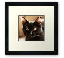 Black cat looking at camera Framed Print