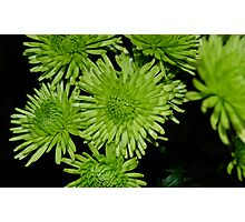 really green flowers Photographic Print