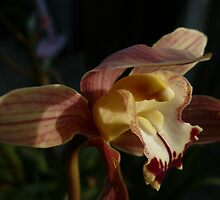 Orchid Portrait by beeden