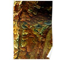 Scales of Bark Poster
