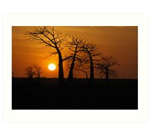 Boab Sunset Art Print