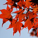 red leafs by mc27