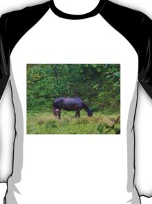 Soggy Equine Beauty in Bocas Del Toro T-Shirt