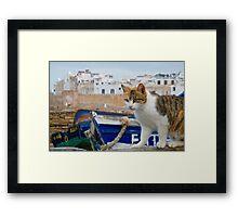 Maroc - Chat d'Essaouira Framed Print
