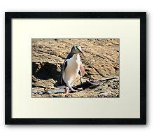 Yellow-eyed Penguin Walking - Catlins region of New Zealand Framed Print