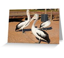 Australian Pelicans, Monkey Mia, Western Australia Greeting Card