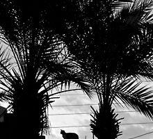 Maroc - Chat de Marrakech by Jean-Luc Rollier
