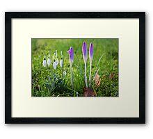 Messengers of Spring Framed Print