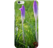 Messengers of Spring iPhone Case/Skin