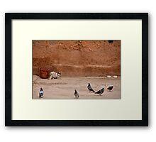 Maroc - Chat et pigeons Framed Print