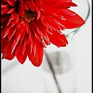 Red and White by katievphotos