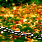 Fall Chain-ges. by Paul Rees-Jones
