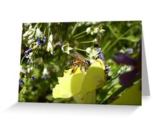 pollen hunt Greeting Card