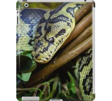 Carpet PythonCarpet python close up iPad Case/Skin
