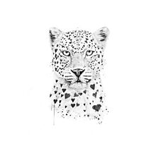 Lovely leopard Photographic Print